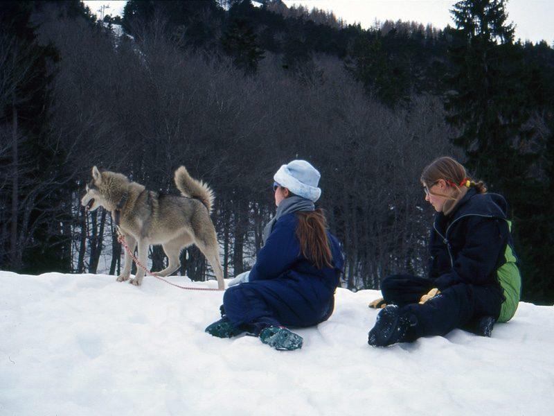 Enfants et chien de traineau, séjour montagne